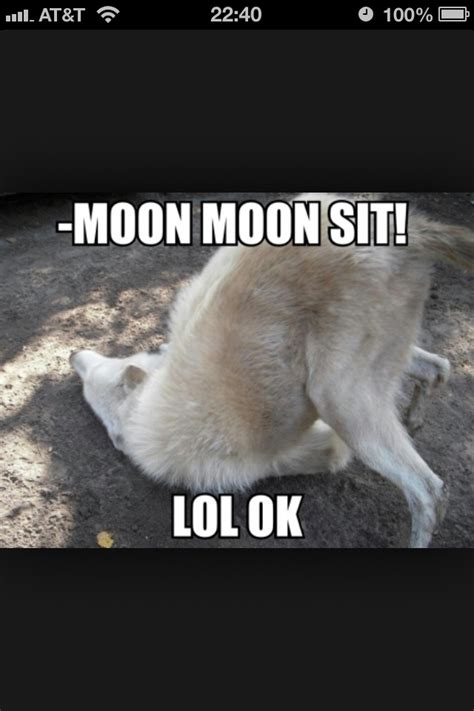 Moon Meme - thats the saga of moon moon for ya he thinks he face is the wrong thing attack of the