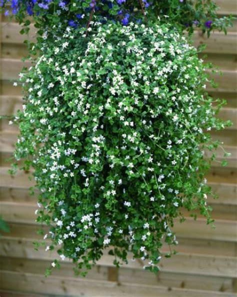 plante grimpante exterieur ombre maison design mail