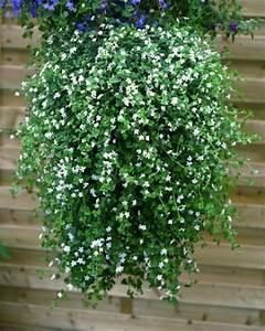 Plantes Et Fleurs Pour Balcon : duthoit horticulture production et vente de plantes ~ Premium-room.com Idées de Décoration