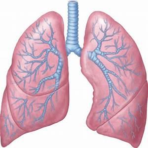 Part 2  Acute Asthma  Prognosis  And Treatment