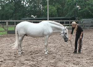 Longeing a horse | Tips & Information | Straightness Training