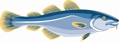 Fish Cod Clipart Trout Arctic Getdrawings Haddock