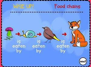 Decomposers In Food Chain Pictures to Pin on Pinterest ...