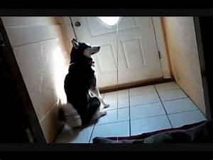 A Dog's Sad Story, Siberian Husky - YouTube