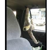 Put Your Seat Belt On Sloth  Sloths Animals
