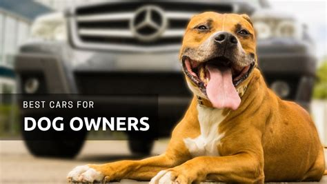 best for owners the 15 best cars for dog owners to buy in 2018