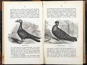First editions of Darwin's Origin of Species – Circulating ...