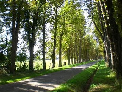 Avenue Trees Landscape Tree Alley Street France