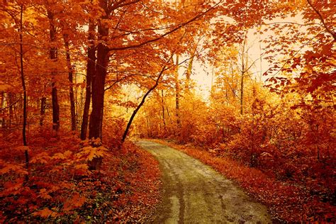 Awesome Autumn Forest Track Download Wallpaper For Mobile