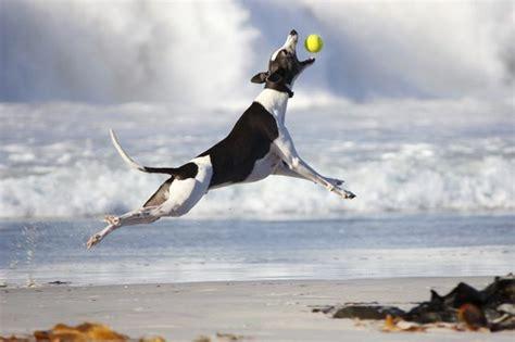 highest jumping dogs cutenesscom