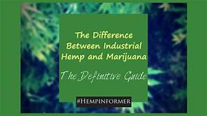The Difference Between Industrial Hemp And Marijuana  The