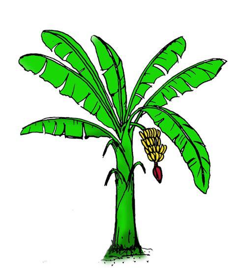 96 gambar pohon kelapa kartun cikimm