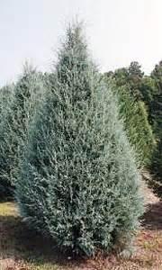 favorite tree varieties south carolina tree association