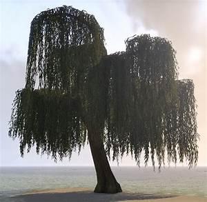 Elder Scrolls Online Tree, Gentle Weeping Willow - ESO Fashion