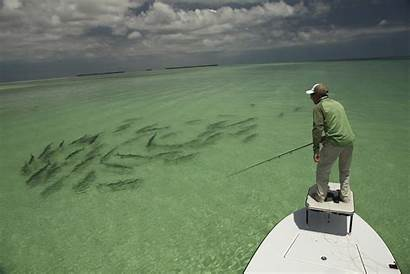 Fishing Offshore Saltwater Fly Pix