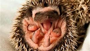 Yawning baby Animals and cute animals Compilation ...