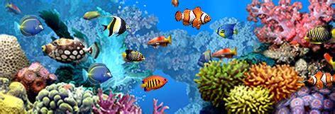 classroom aquarium process