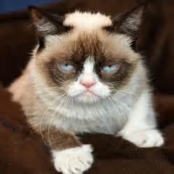 grumpy cat breed quotes by grumpy cat like success