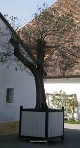 Baum Im Topf : olivenbaum ~ Michelbontemps.com Haus und Dekorationen