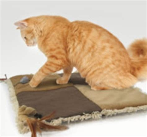 cat play mat baby your cat with its own play mat petslady