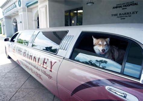 chambre de chien un hôtel de luxe pour chiens et chats pour des vacances
