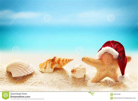 starfish in santa hat on summer beach stock photo image