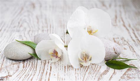bilder von weiss orchideen blumen