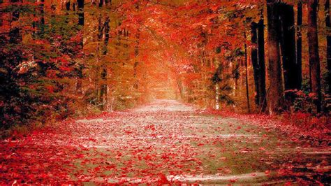 1080p Fall Desktop Backgrounds Hd by Hd 1080p Fall Wallpaper Wallpapersafari