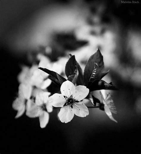 photo bébé noir et blanc noir et blanc