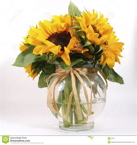 Sunflowers In Vase Stock Photo   Image: 5370
