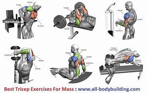 Building Biceps Is One Of The Important Parts Of Body