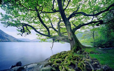 pflanze große blätter die 71 besten baum hintergrundbilder