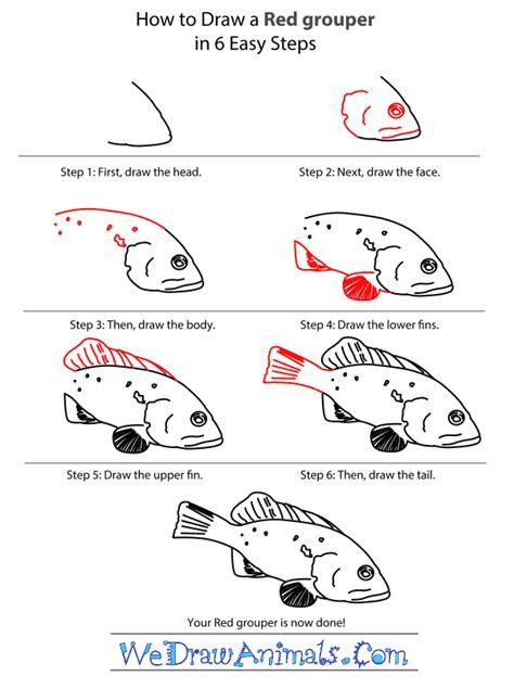 grouper draw step tutorial