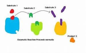 File Enzymatic Reaction Jpg