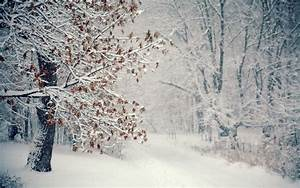 Falling Snow HD wallpaper | HD Latest Wallpapers