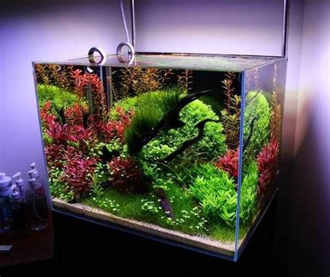 Aquascaping Ideas For Planted Tank by Beautiful Planted Aquascape By Dantrasy Freshwater