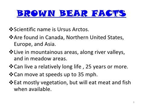 black bears and brown bears and 818   black bears and brown bears and 6 728