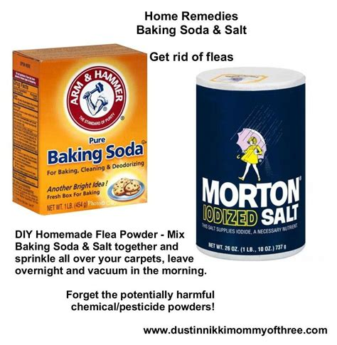 how to get rid of bugs in kitchen cabinets diy flea powder for your home get rid of fleas w o using 9905
