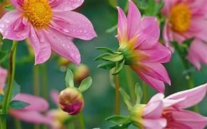 Beautiful Nature Wallpaper Flowers