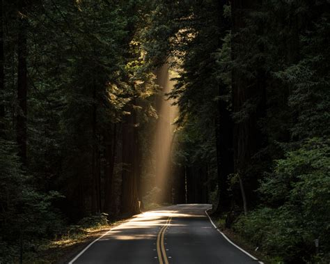 Wallpapers Photo by Conifer Daylight Evergreen Forest Highway Wallpaper
