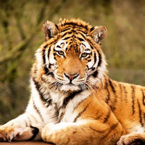 Animal 3d Live Wallpaper - animals live wallpaper apk free personalization