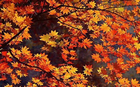 Fall Backgrounds Free by 41 Free Fall Wallpapers And Backgrounds For All Your