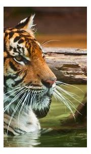 Best Places to Spot Tigers in India | Waytoindia.com