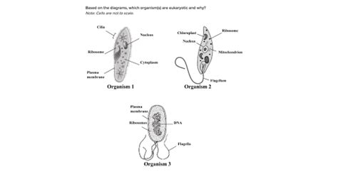 prokaryotic  eukaryotic cells practice khan academy