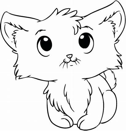 Cat Coloring Pages Tabby Kitty Printable Kitten