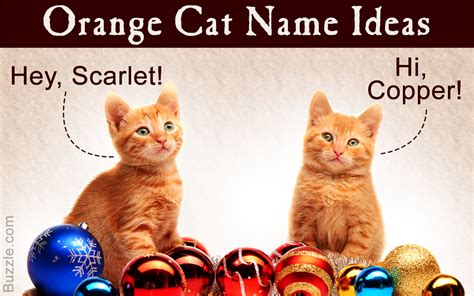 Awesome Male And Female Orange Cat Names For Your Gorgeous Pet