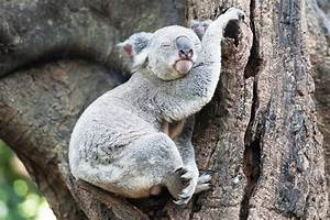 The Sleepiest Animal In The World