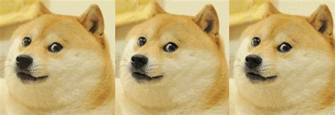 shibas gifs find share  giphy