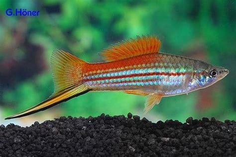 Lava L Fish Tank Walmart by Top 198 Ideas About Aquariums The Fish On