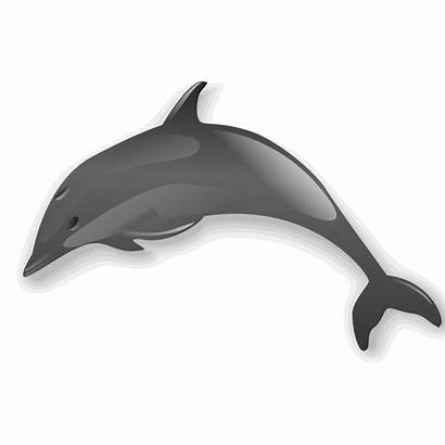 Dolphin Svg Clip Transparent Background Dolphins Clipart